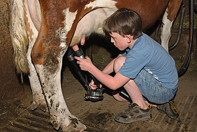 Germany, Baden-Wuerttemberg, Boy milking cow - p300m2207260 by Albrecht Weißer
