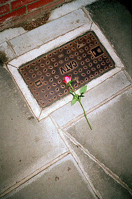Single rose on pavement - p3882866 by Jim Green