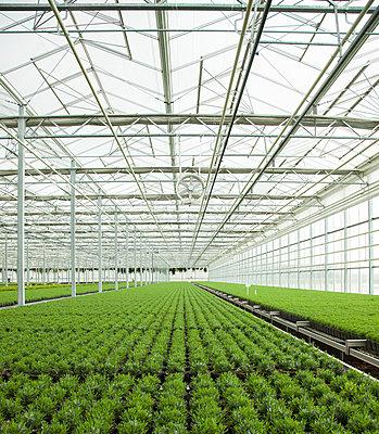 Greenhouse - p902m1031574 by Mölleken