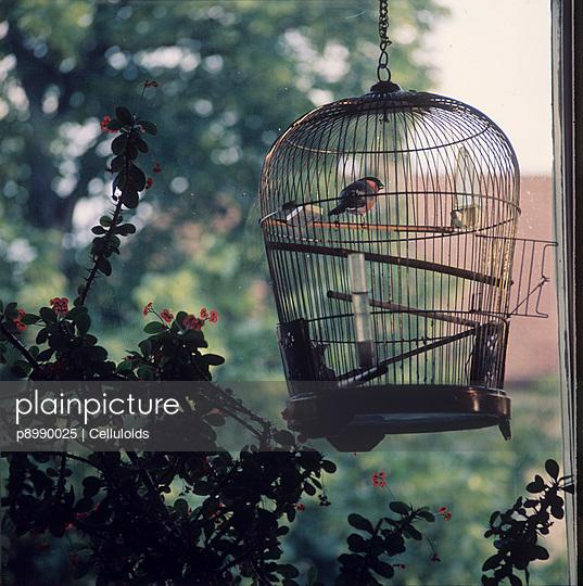 Offener Vogelkäfig - p8990025 von Celluloids