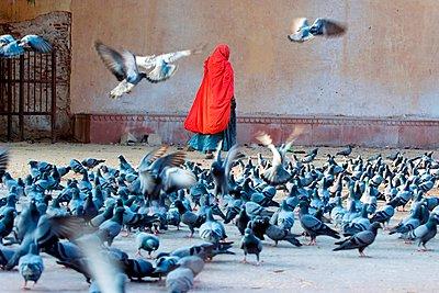 p1403m1482747 von India Picture