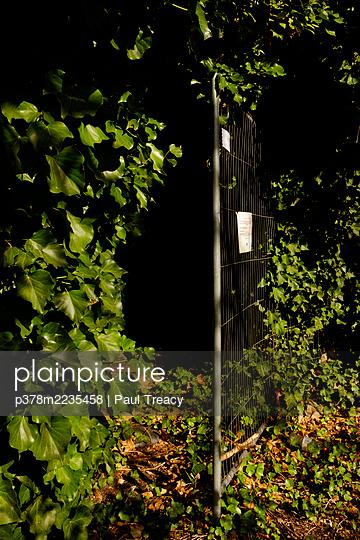 Entrance into woodland - p378m2235458 by Paul Treacy