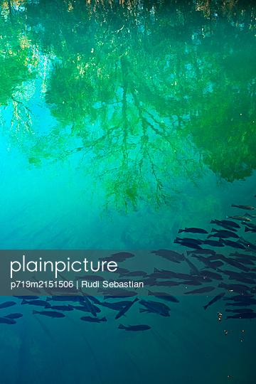 p719m2151506 by Rudi Sebastian