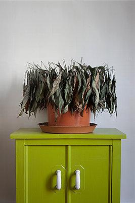 Dead plant  - p1028m1152495 by Jean Marmeisse