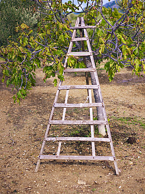 Triangular ladder - p885m891274 by Oliver Brenneisen