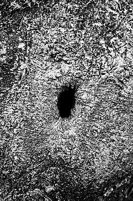 Hole in a tree - p1661m2245364 by Emmanuel Pineau