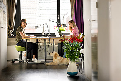 Man and woman with dog working at desk at home - p300m1535929 by Peter Scholl
