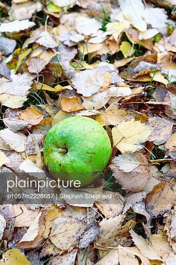 Fallobst - p1057m2228687 von Stephen Shepherd