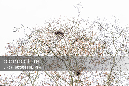 Abandoned Nests - p1488m1573559 by Sid Miller