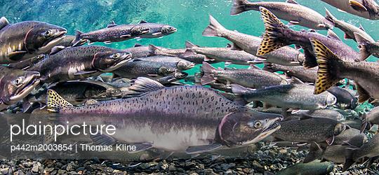 p442m2003854 von Thomas Kline