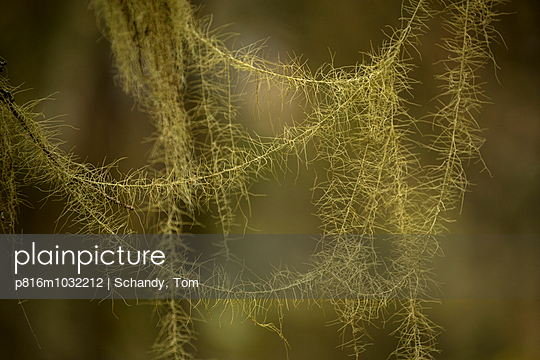 Interwoven plants - p816m1032212 by Schandy, Tom