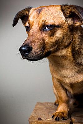 Dog - p1076m858967 by TOBSN