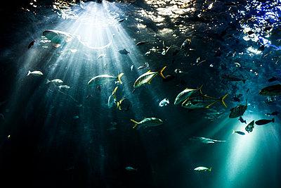 Aquarium - p1263m1067989 by Tomas Engel