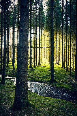 Kleiner Bach im Wald - p1312m1196298 von Axel Killian