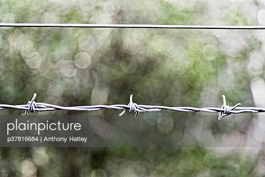 Close-up of barbed wire - p37816684 by Anthony Hatley