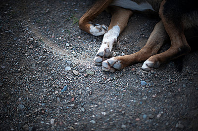 Dog takes a nap - p1007m886911 by Tilby Vattard
