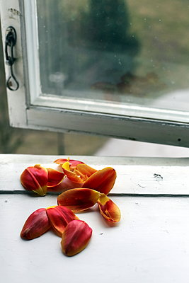 The tulips - p1063m1132343 by Ekaterina Vasilyeva