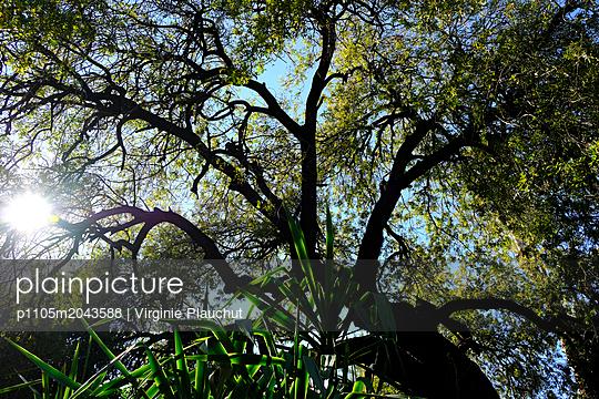 Garden - p1105m2043588 by Virginie Plauchut