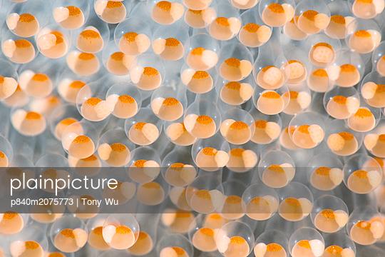 p840m2075773 von Tony Wu
