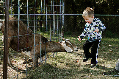Boy looking at goat while jumping on field - p1166m1211584 by Cavan Images