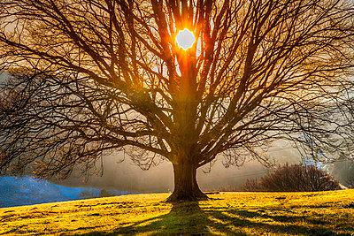 Baum - p1205m1515981 von Toni Anzenberger