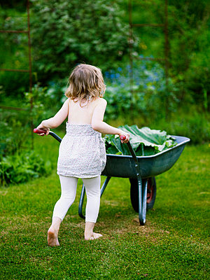 Girl pushing wheel-barrow with rhubarb leaves - p528m718710f by Anna Kern