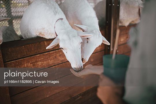 p1166m1182895 von Cavan Images