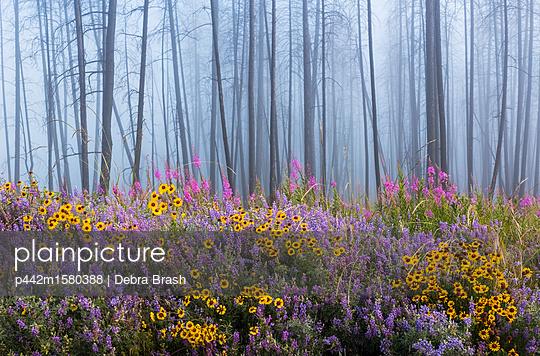 plainpicture - plainpicture p442m1580388 - Kettle River Recreation Are... - plainpicture/Design Pics/Debra Brash