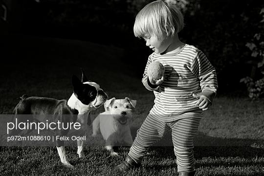 Kleinkind spielt mit Hunden im Garten - p972m1088610 von Felix Odell