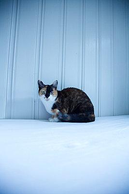 Katze - p3520450 von Daniel Sahlberg
