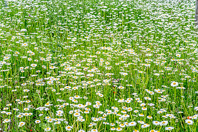 Wildflower meadow - p401m2281074 by Frank Baquet