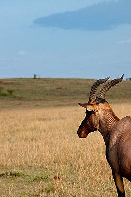 Masai Mara National Park - p5330357 by Böhm Monika