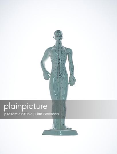 Menschliches Modell - p1318m2031952 von Tom Seelbach