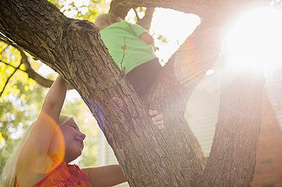 Low angle view of Caucasian children climbing tree - p555m1421654 by JGI/Jamie Grill
