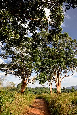 Bäume an einem Feldweg - p1032m1220660 von Fuercho