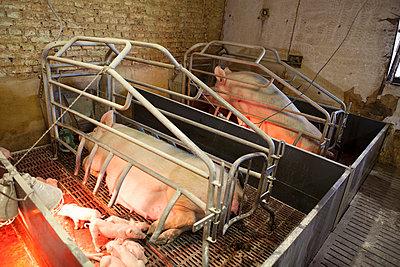 Tierhaltung - p1058m817156 von Fanny Legros