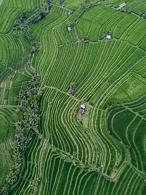 High angle view of patterned agricultural field in village - p1166m2001205 by Cavan Images