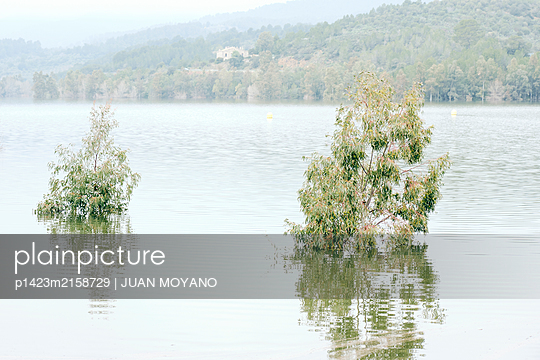 Eucalypts trees covered by water at Riudecanyes reservoir, inSpain - p1423m2158729 by JUAN MOYANO