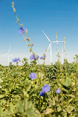 Feldblumen mit Windkraftanlagen - p1079m1184960 von Ulrich Mertens