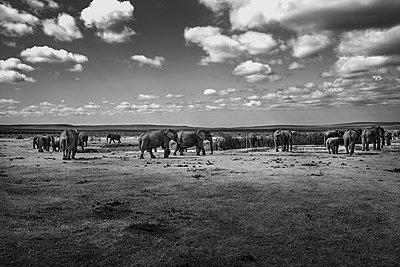 Gorah South Africa Elephant Camp  - p1171m1143950 by SimonPuschmann