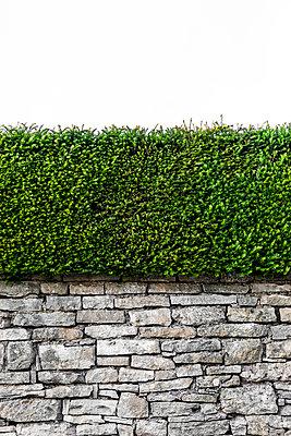 Natursteinwand mit Hecke - p248m1034097 von BY
