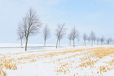 Germany, country road and trees at winter landscape - p300m911382f by Jana Mänz