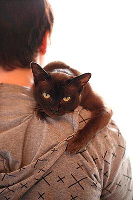 A Burmese cat looks over a shoulder - p1072m905489 by Mia Mala McDonald