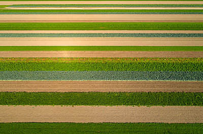 Fields with various useful plants, drone photography - p1132m2215536 by Mischa Keijser