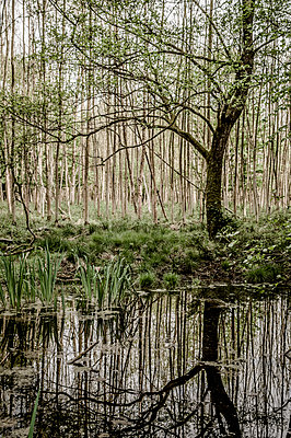 Weiher im Wald - p401m1464668 von Frank Baquet