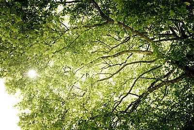 Tree - p445m911823 by Marie Docher