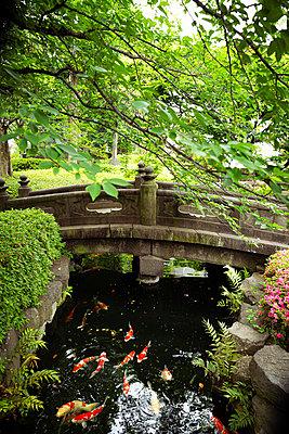 Koi carps in a pond - p756m2122627 by Bénédicte Lassalle