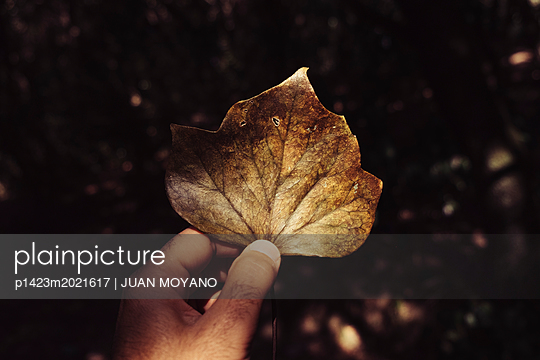 Mann hält Blatt - p1423m2021617 von JUAN MOYANO