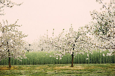 Orchard - p1088m902291 by Martin Benner