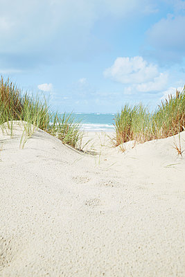 Beach grass - p464m1123931 by Elektrons 08